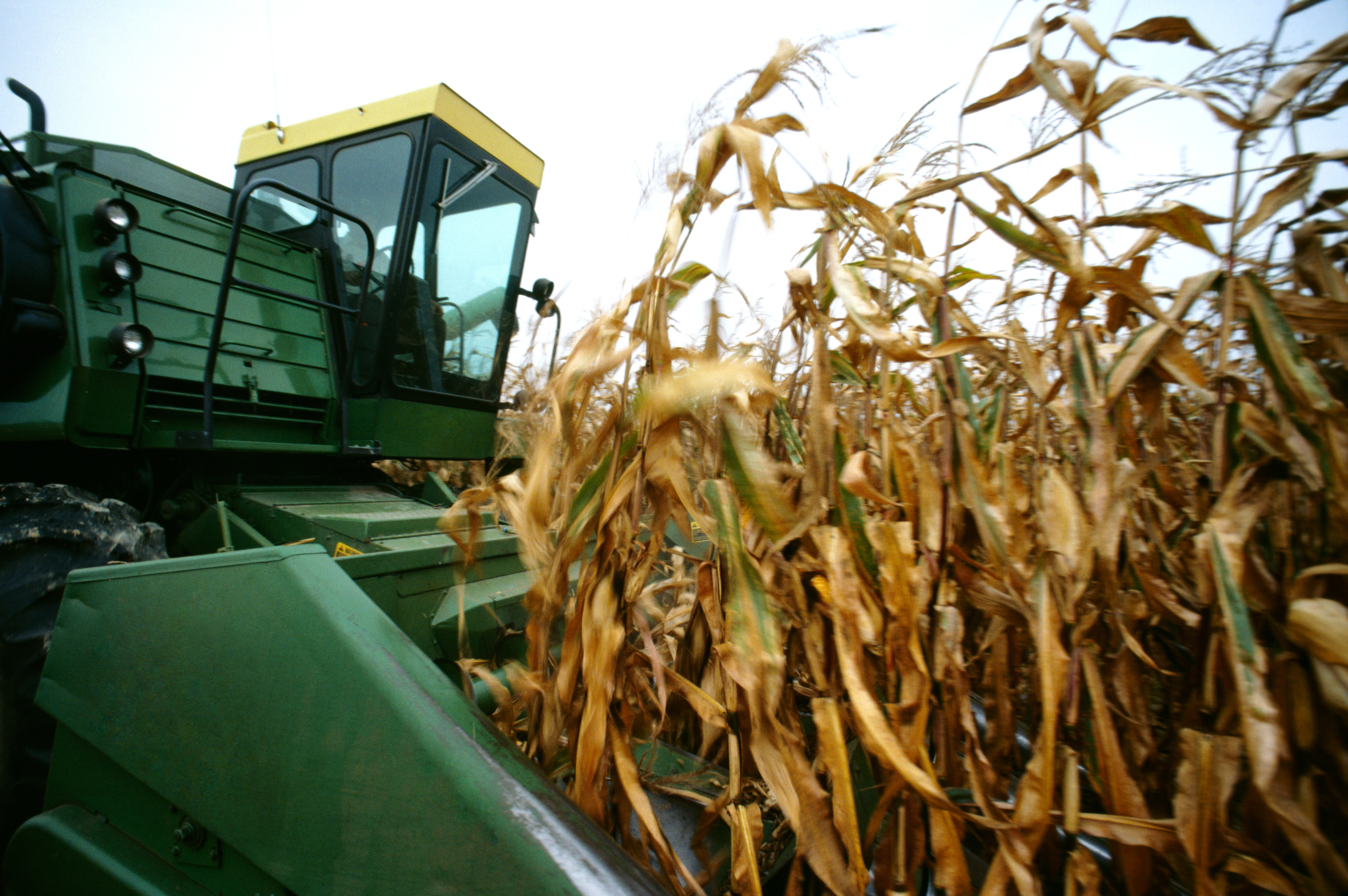 StockPhotography_Purchased_Photo_Agriculture_026